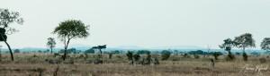 Tanzania-10