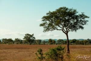 Tanzania-15