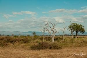 Tanzania-16