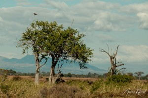 Tanzania-17