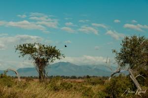 Tanzania-19