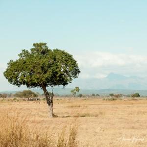 Tanzania-21