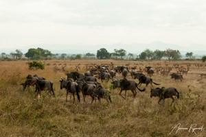 Tanzania-7